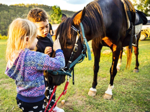 Fordsdale Farmstay Family Experiences